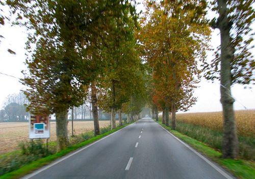 Un sofer a primit despagubiri de 3.500 de euro de la CNADNR din cauza ca i-a cazut un copac pe masina
